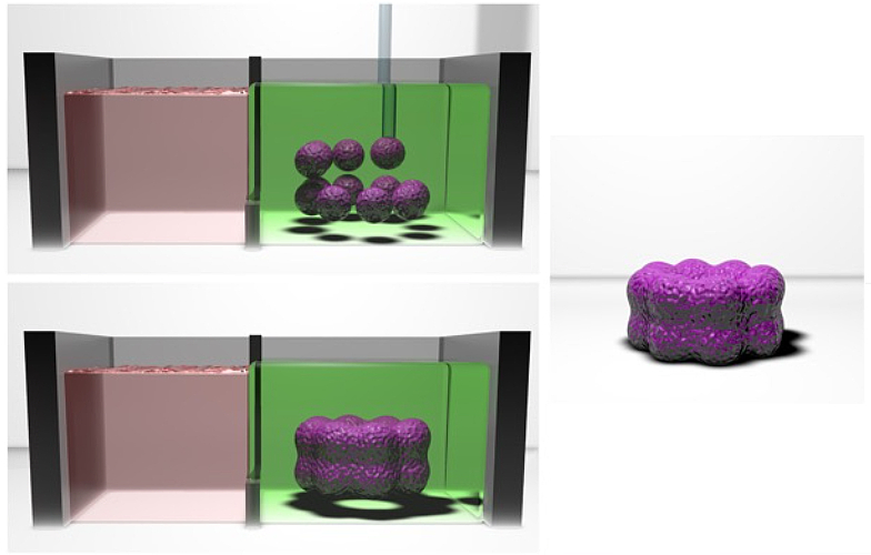 An illustration of purple spheres, representing clumps of cells, being assembled into a ring, then released from the gel holding them in place.
