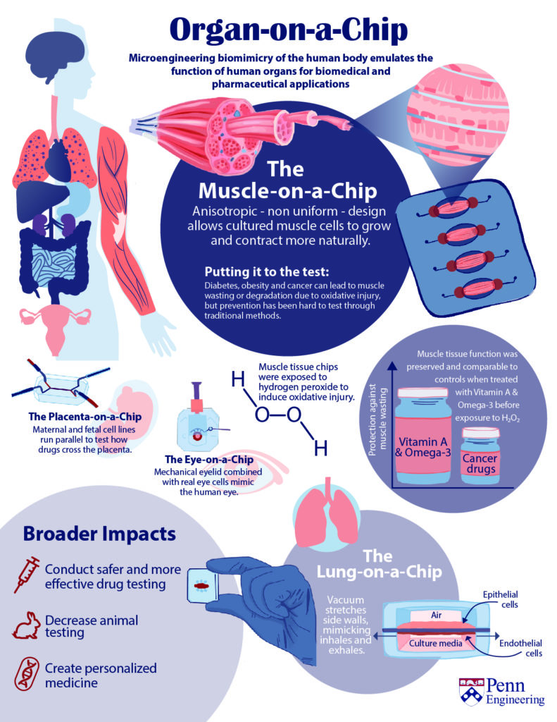 Organ on a chip infographic