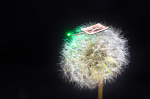 A thin microbattery powering a green LED rests atop a dandelion.